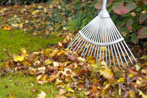 Rake next to pile of fallen autumn leaves on green garden lawn, shallow depth of field
